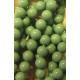 Perle Swarovski 5810  6 mm Jade Pearl - 10  Pz